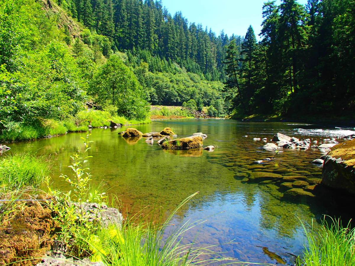 Best of the us fishing at north fork river oregon for Best fishing in the us