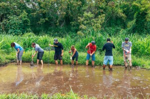 OluKai Ho'olaule'a Giveback Day 2015 Taro Planting 3