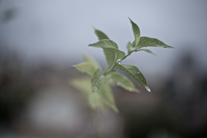 rain garden 2