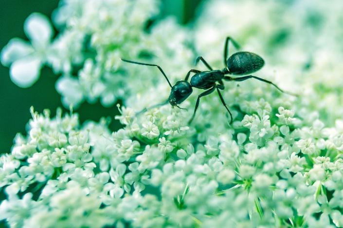 bug ab